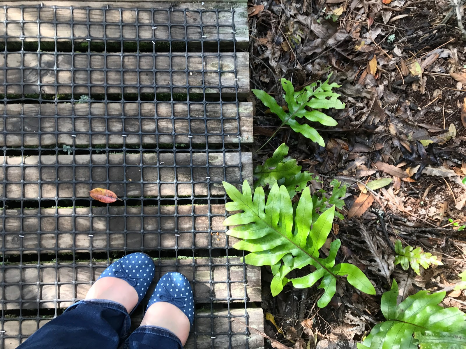 Expat Life: Giving my London home a touch of New Zealand Adventures of a London Kiwi