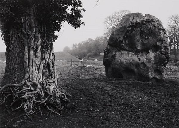 Paisaje, árbol, piedra grande, pradera, extraño.