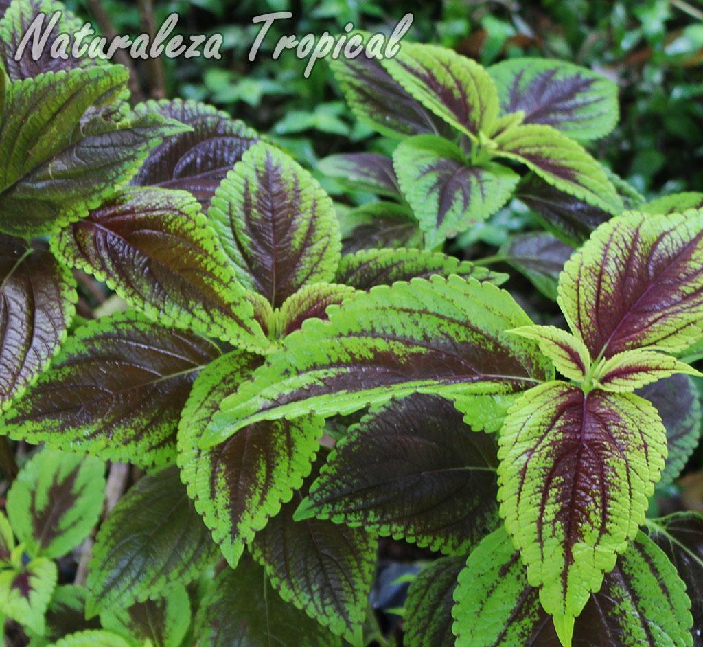 Naturaleza tropical 5 grupos de plantas de atractivo for Follaje para jardin