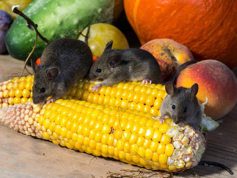 Supaya Rumah Tidak Didatangi Hewan-hewan Pengganggu