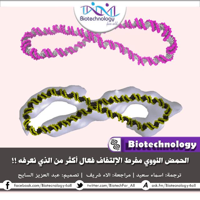 دراسة تفيد أن الحمض النووي مفرط الإلتفاف أكثر ديناميكية مما هو متعارف عليه