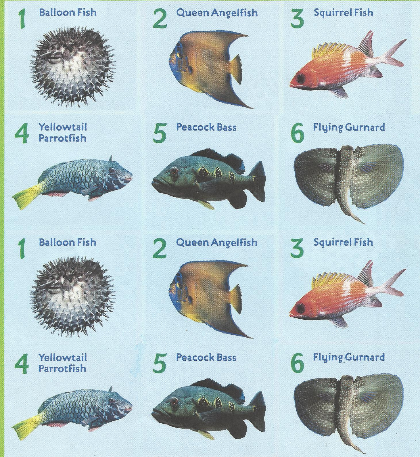Common and types of common types of trees beatiful tree for All fish names