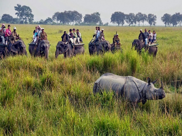 Kaziranga National Park,Assam