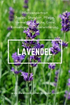 Lavendel-Pin-Steiermarkgarten