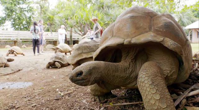 Isla Mauricio en viajeros cuatro