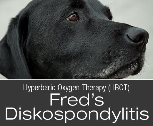 Hyperbaric Oxygen Therapy (HBOT): Fred's Diskospondylitis