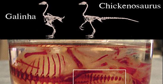 'Jurassic World' real: cientistas estão criando dinossauro híbrido de galinha