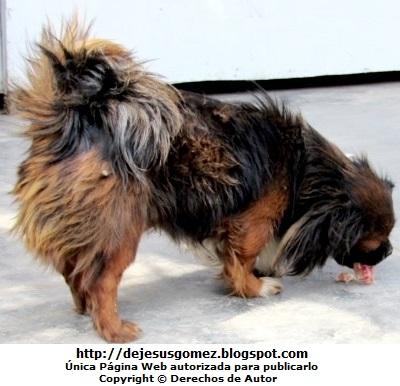 Foto de perfil de un perro comiendo cabeza de pollo. Foto de un perro de Jesus Gómez