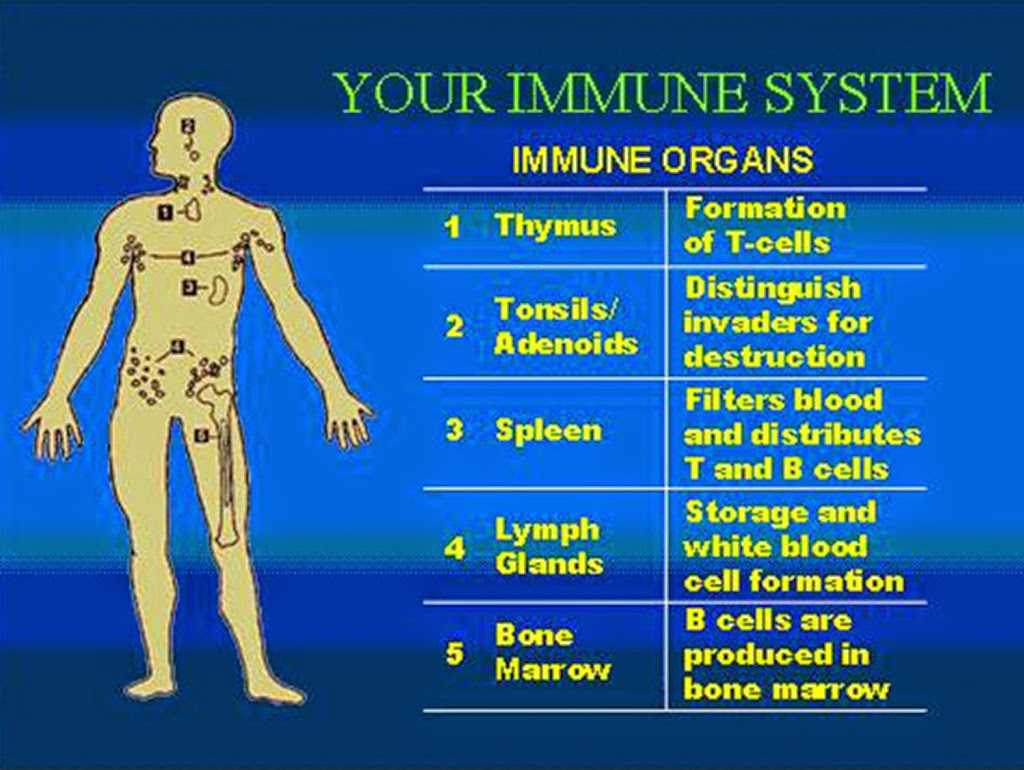 Enhancing Your Immune System With Honey, Lemon, Ginger Syrup