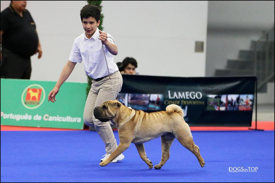 Euro Dog Show Kortrijk Belgium