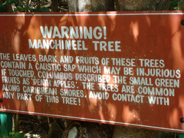 Manchineel-warning-signs