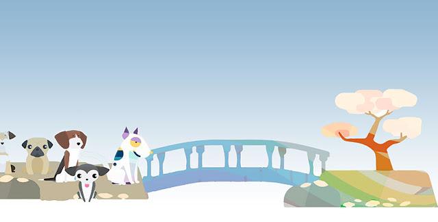 perros pasando por un puente arco iris