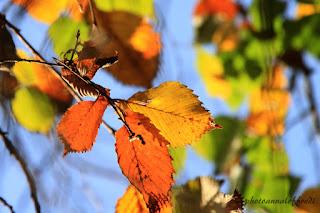 autunno colore