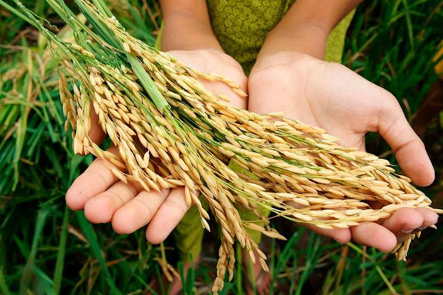 https://www.radiantinsights.com/research/global-crop-protection-chemicals-market-2018-2022?utm_source=Blogger&utm_medium=Social&utm_campaign=Bhagya14Aug&utm_content=RD