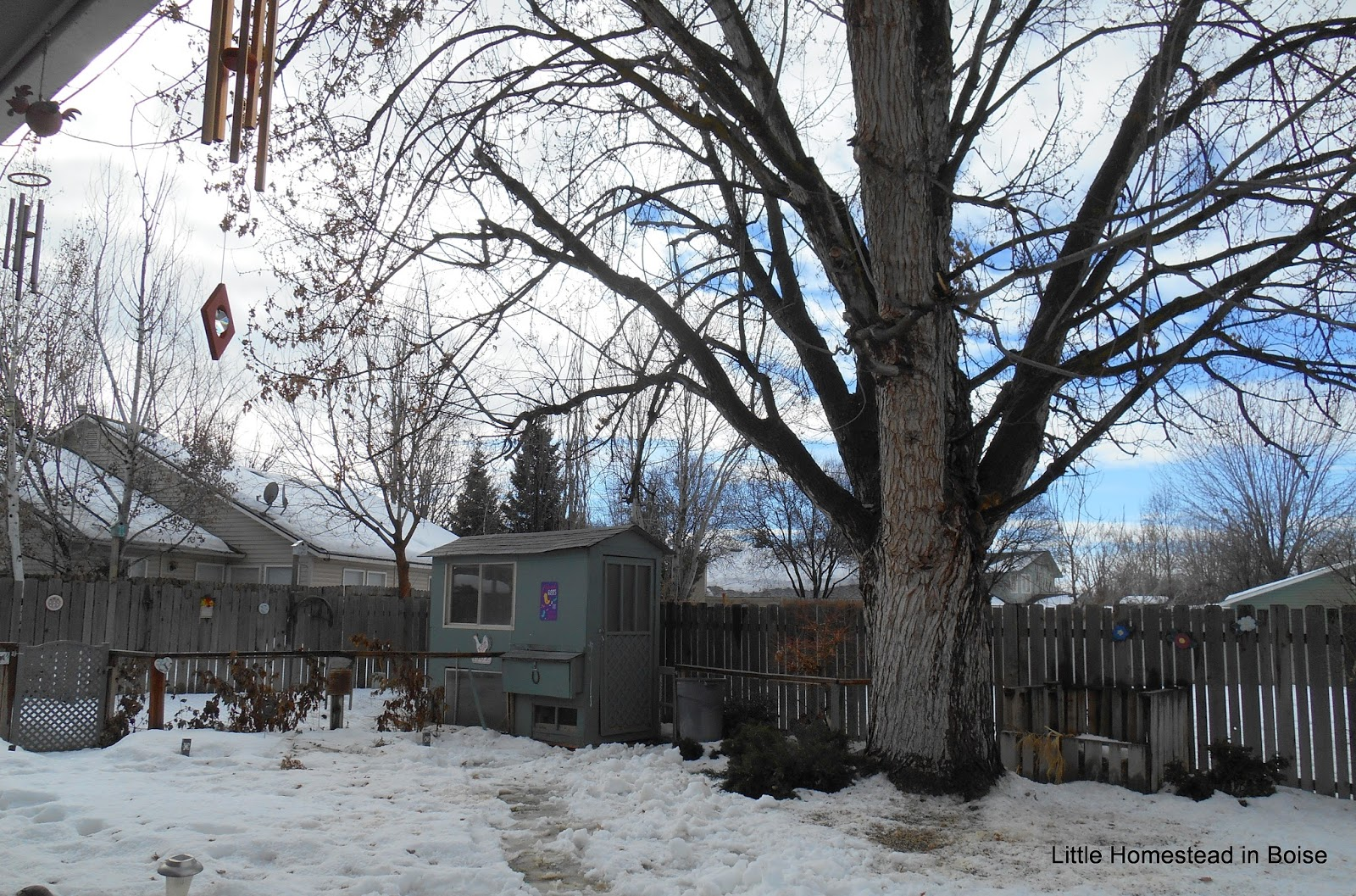 Little Homestead In Boise : More Crazy Weather! Got My Hand