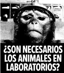 NO a los experimentos científicos con animales