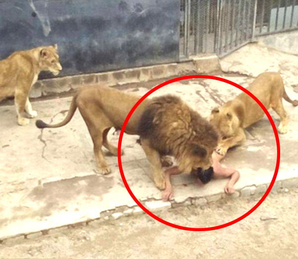 Man caught by Lion