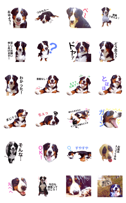 LINE Creators' Stickers - Bernese Mountain Dog by Tommy