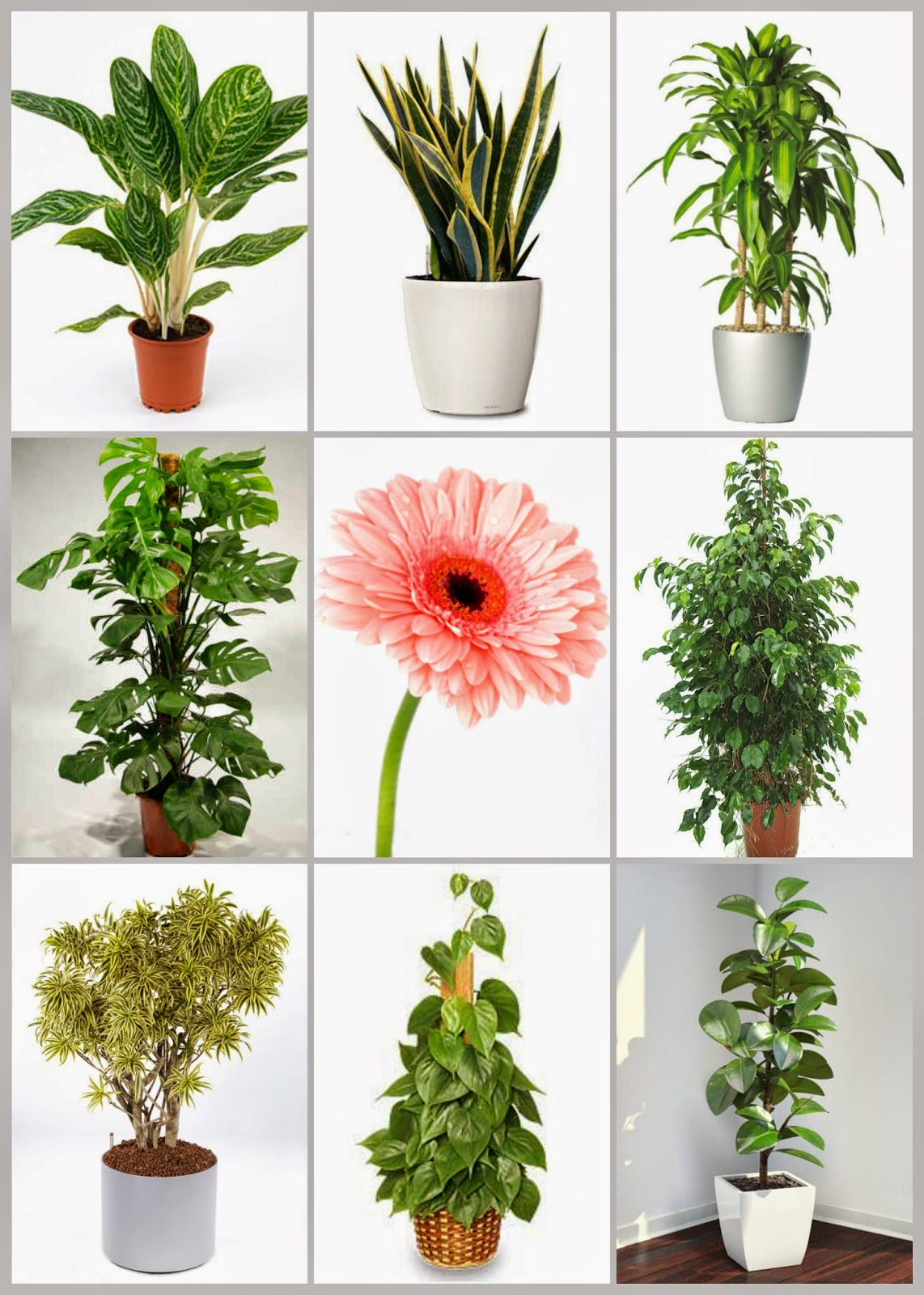 Plantas_de_interior_purificadoras_do_ar