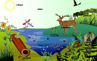 Komponen Penyusun Ekosistem Biotik dan Abiotik Terkompleks Komponen Penyusun Ekosistem Biotik dan Abiotik Terkompleks