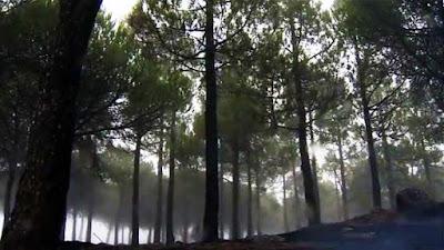 Mujer desaparecida incendio Gran Canaria