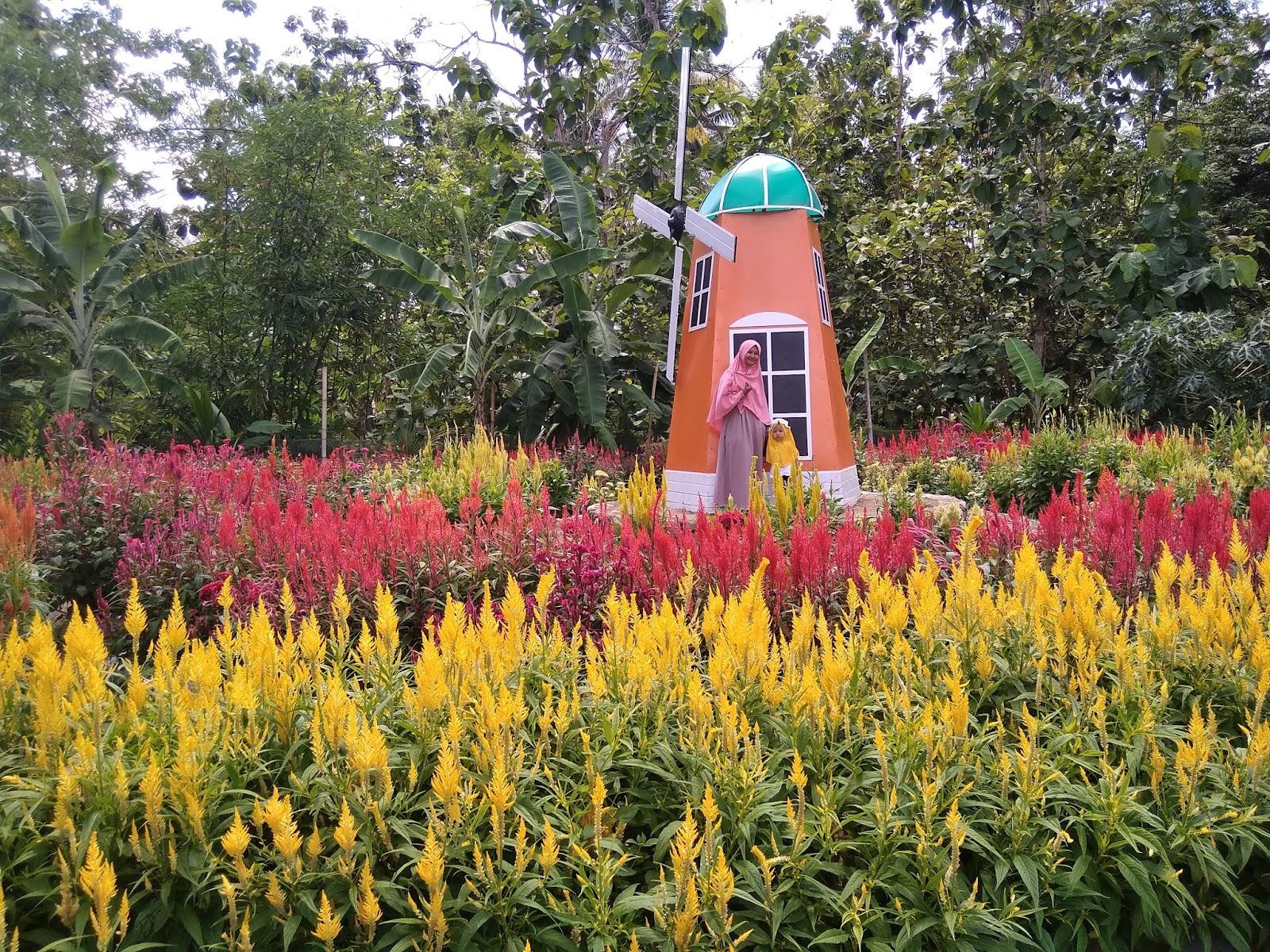 Di Belanda Ada Tulip Di Klaten Ada Ini Good News From Indonesia