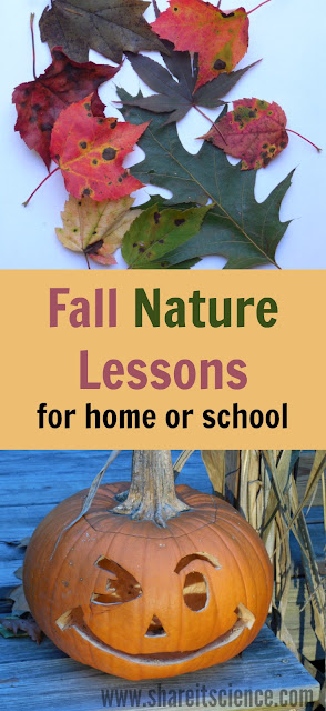 Fall Nature Lessons Activities