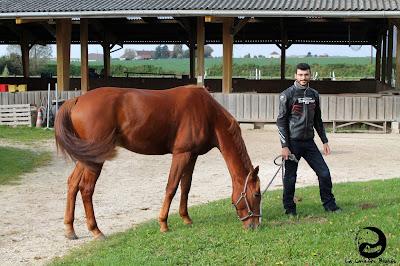Prince charmant sur son cheval alezan.