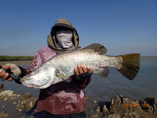 secret barramundi: 70cm barramundi on a live bait fish by my, Fishing Bait