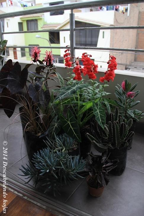 descubriendo hojas: el diseño de un balcón en lima (perú)