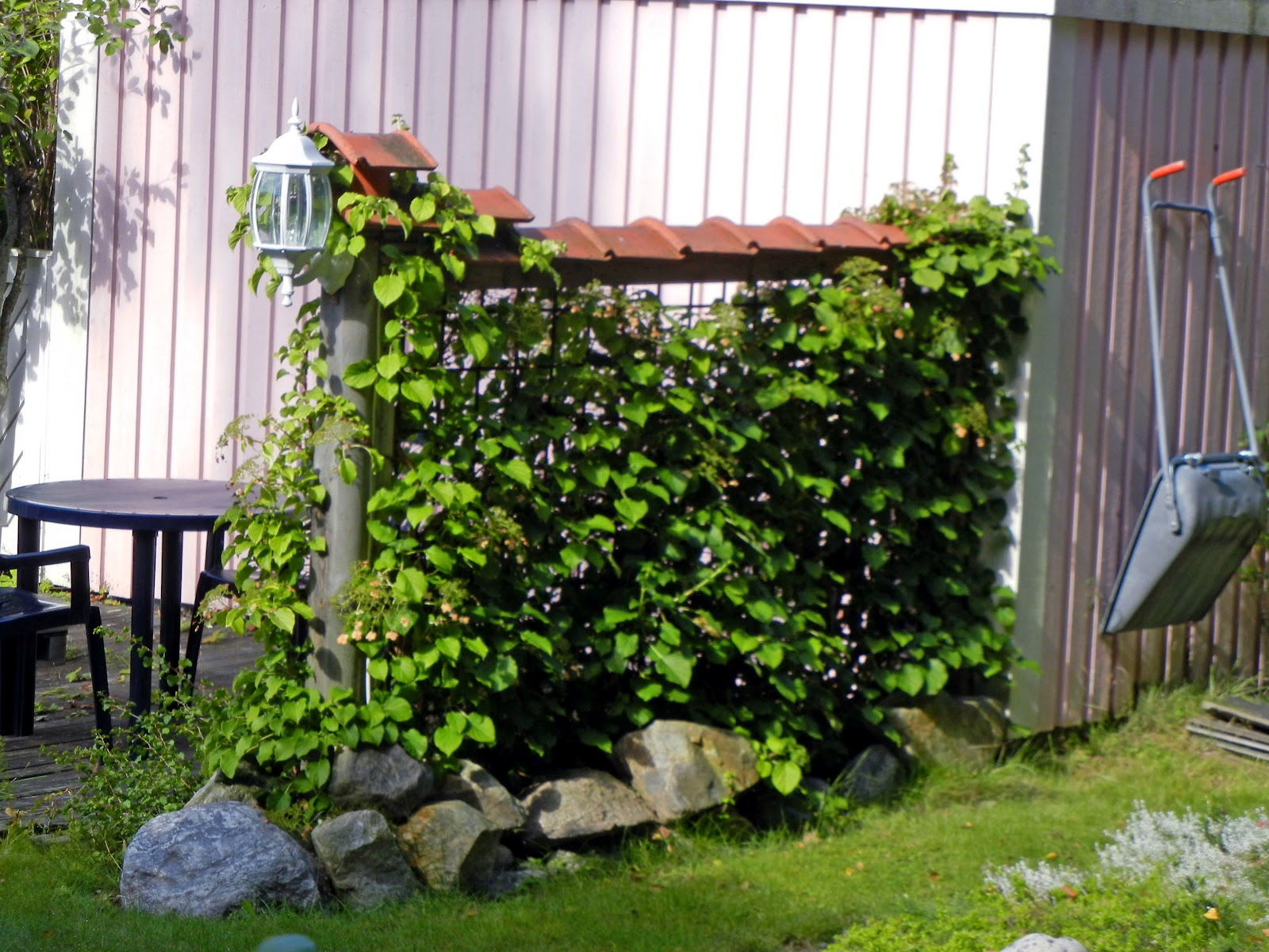 Chain link trellis dressing up your chain link fence