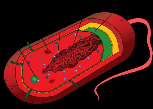 1 3 Describe The Common Features Shown By Prokaryotic