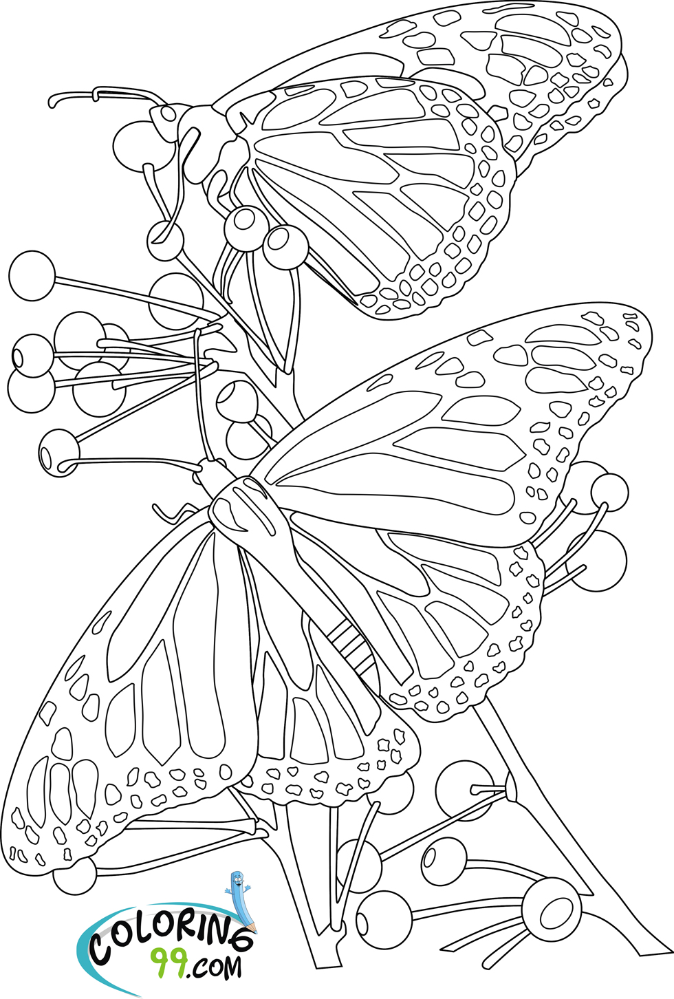 Butterfly And Flower Coloring Pages (9 Image)  Colorings.net