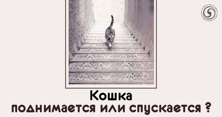 Куда идет кот вверх или вниз картинка