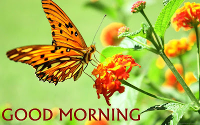 good morning wishes with beautiful butterfly pictures