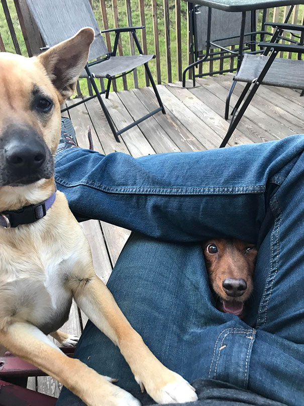 30 Hilarious Pictures Of Dogs Begging For Food That No One Could Resist