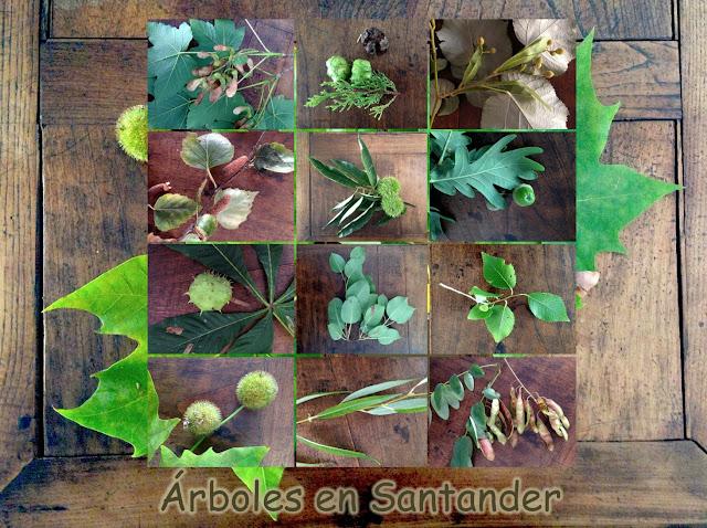 Haz click para ver Árboles en Santander