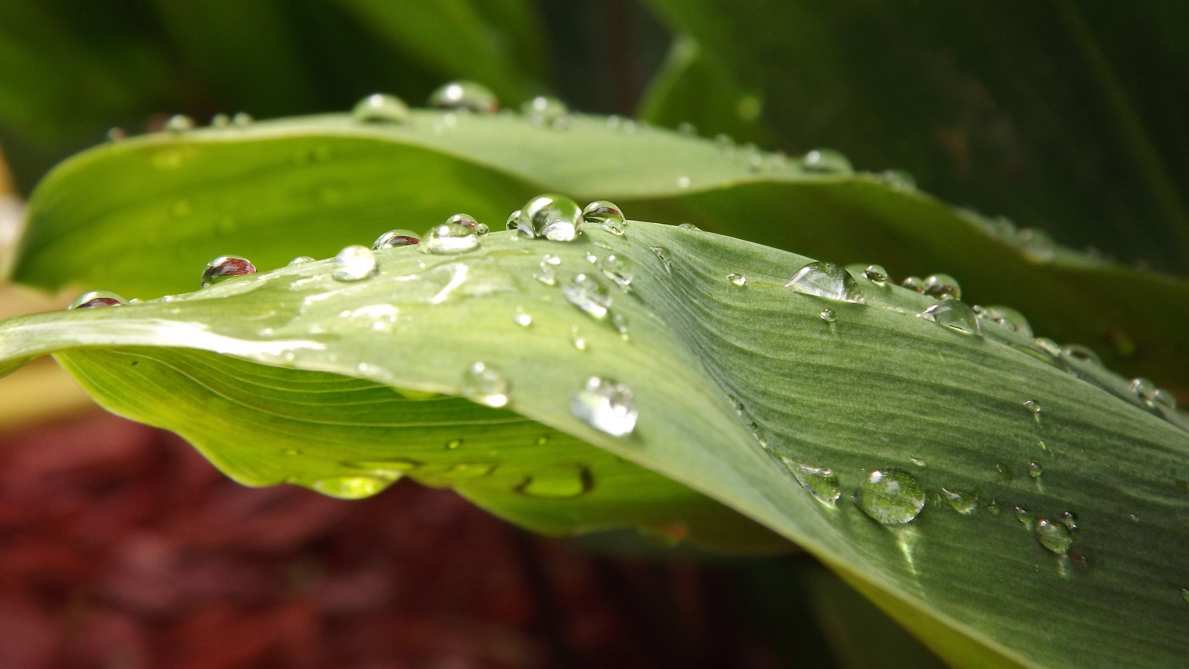 droplets on leaves 4k - photo #1