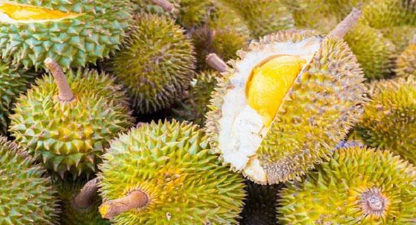 Karena 1 Durian, 1 Universitas Di Evakuasi