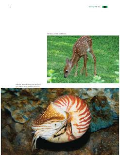 Apoyo Primaria Ciencias Naturales 3ro Grado Bloque II ¿Cómo somos los seres vivos?