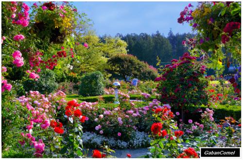 Taman Bunga  Paling  Indah  Di Dunia Gaban Comel