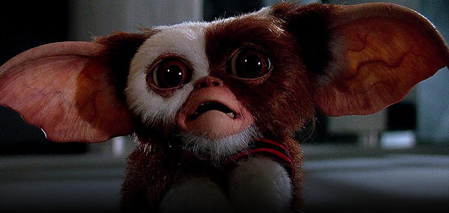 Gizmo, creatura originală din filmul Gremlins
