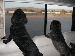 Skruffy and Bubba, California Desert