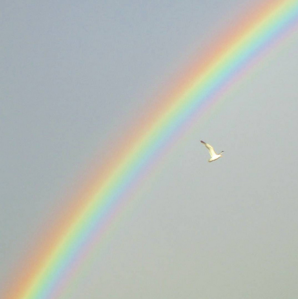 Bright, colourful rainbow with a seagul flying under it. Colorful nature on a rainy day in the spring with grey clouds and sunshine. Beautiful colours.