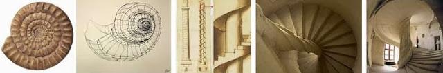Conchiglia e scalinate
