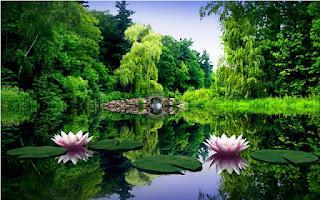 Gambar Lotus Flower_Lotus Flower Picture
