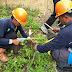 Hindari Tiang Roboh, PLN Rayon Pangandaran Lakukan Perawatan Kawat Ratas
