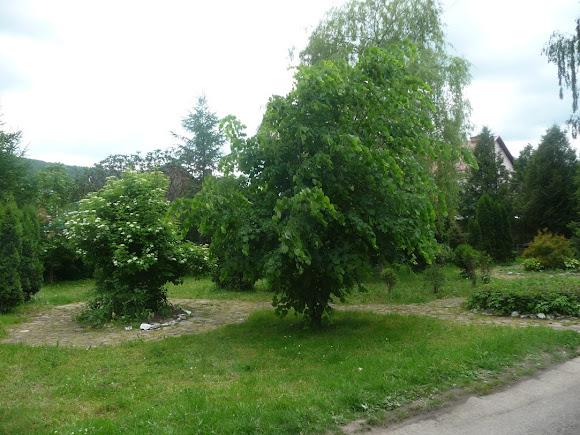 Сколе. Школьный сад