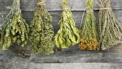 Πλήρης κατάλογος βοτάνων και οι θεραπείες τους – Μάθε τις ασθένειες που θεραπεύει κάθε βότανο!!!
