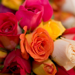 Types Of Roses Rose Wallpapers